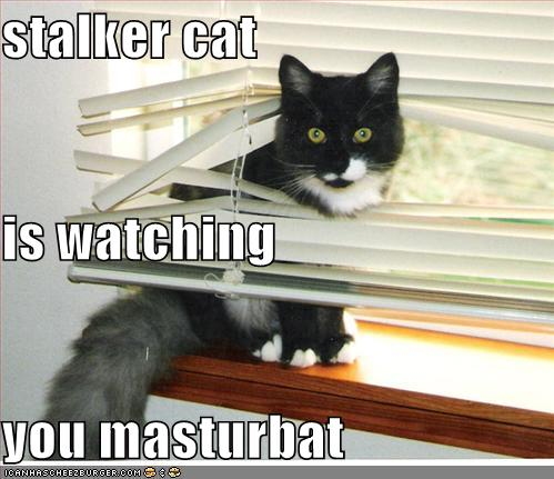 Stalker Cat is Watching You Masturbate